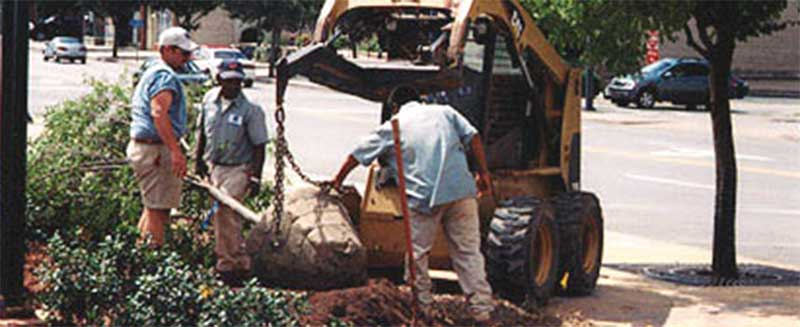 Tree-planting-landscaping